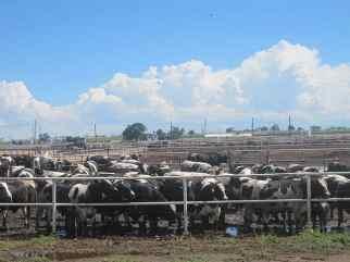 Feed lot overlook in Dodge City, KS