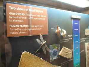 Fossil display at The Creation Museum