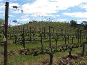 Benzinger Family Winery tram tour