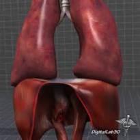 Respiratory System Image