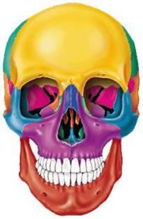 skull image1