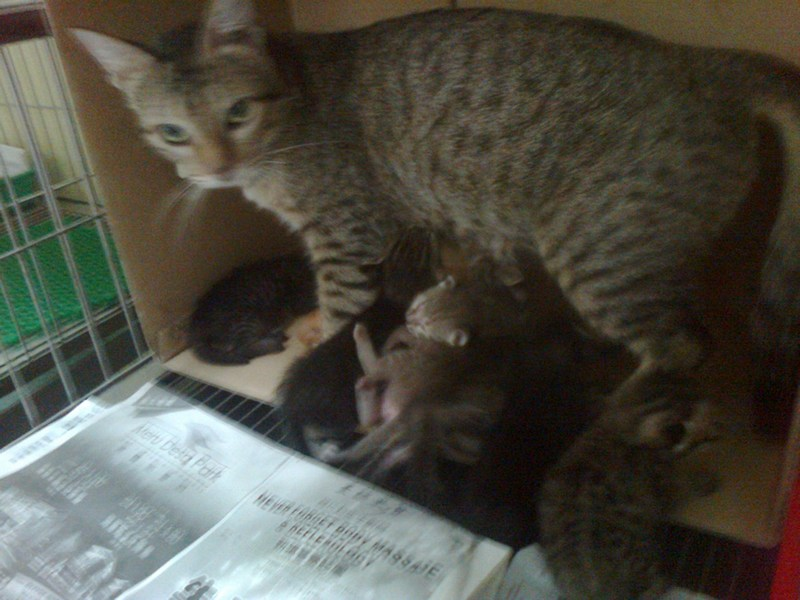 Abandoned mother-cat and 5+2 kittens for adoption (Mayo