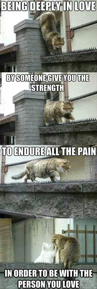 cat relationship
