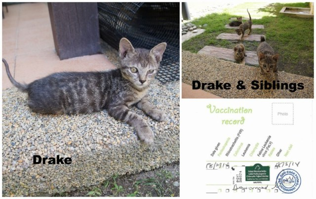 mini-Drake PicMonkey Collage