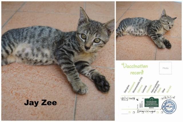 mini-Jay Zee PicMonkey Collage