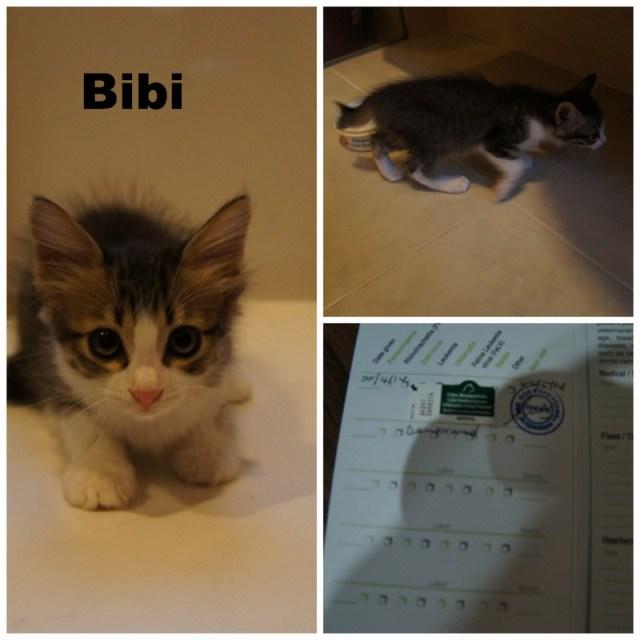 mini-Bibi Pic Collage