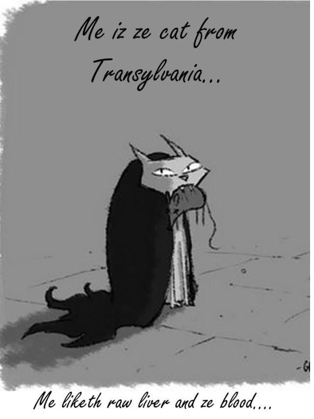 Me iz ze cat from Transylvania