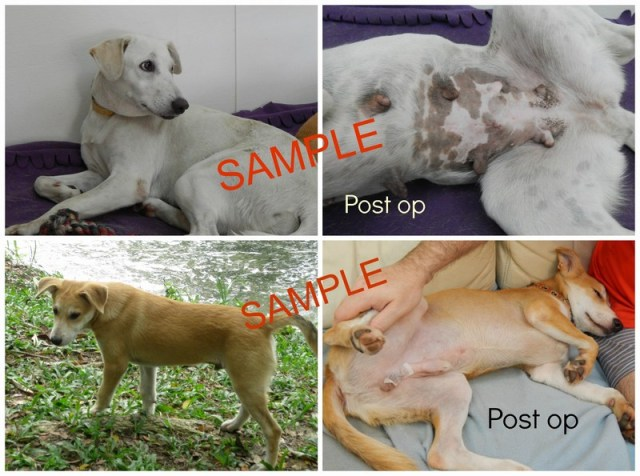 SAMPLE dog neuter