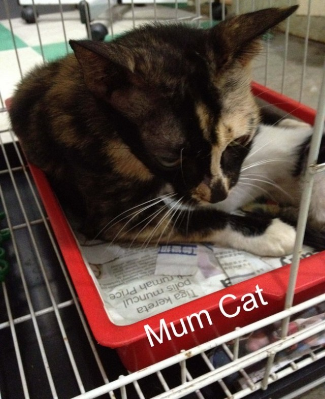 mini-mum cat