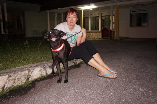 mini-Blacky with her new adopter