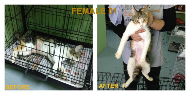 Female 01 spayed