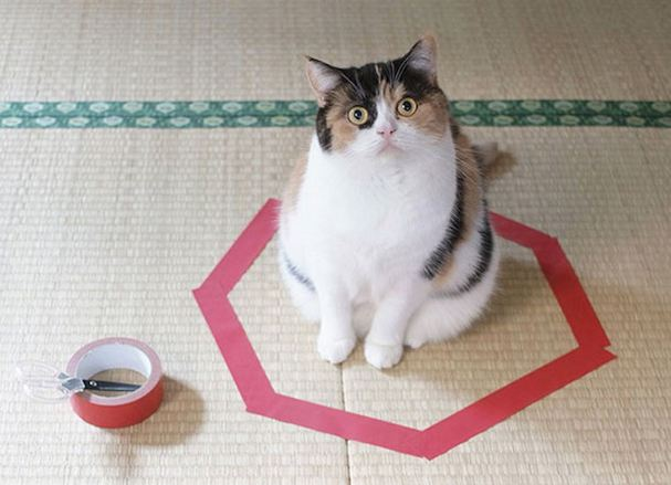 cat trap 1