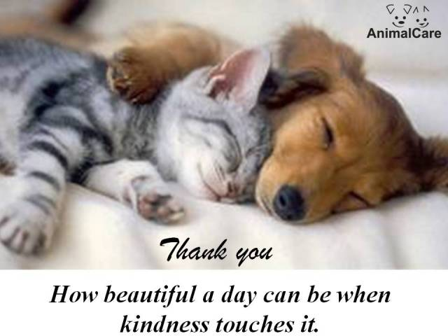 thank you dog & cat