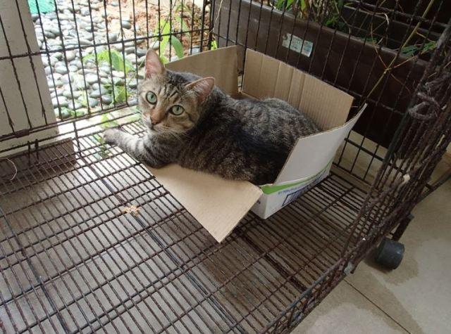 tiger in box