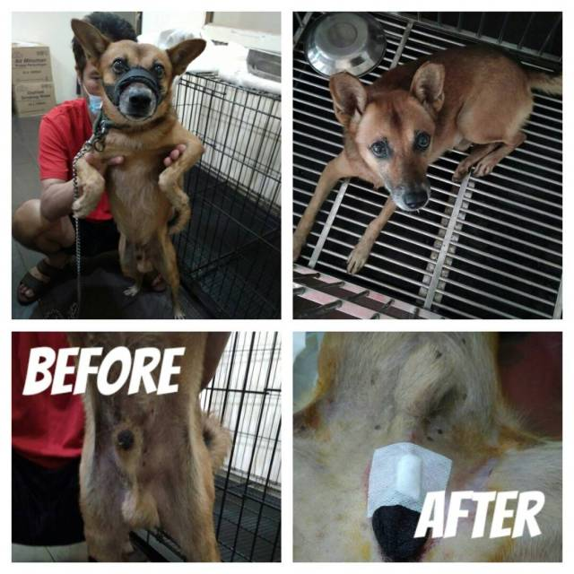 Neutering Aid For 3 Dogs In Rawang (Danny Lee Choon Kuan's)