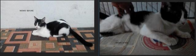 Neutering Aid For 2 Cats In Rawang (Sharifah Hasanah Bt Syed Mohd Khalid's)