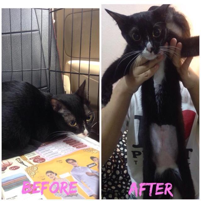 Neutering Aid For 2 Cats In Kuantan (Rabiatul Adawiah Bt Muhamed Khadri's)