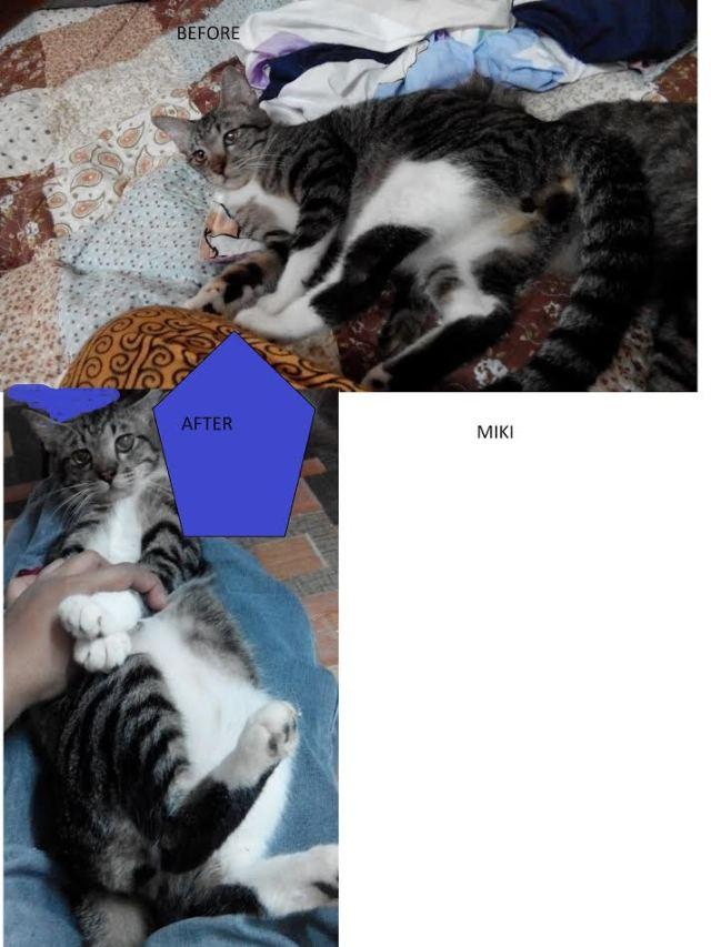 Neutering Aid For 3 Cats In Rawang (Sharifah Hasanah Bt Syed Mohd Khalid's)