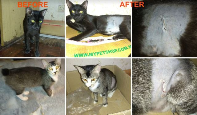 Neutering Aid For 2 Cats In USJ (Pat Ong Swee Kim's)