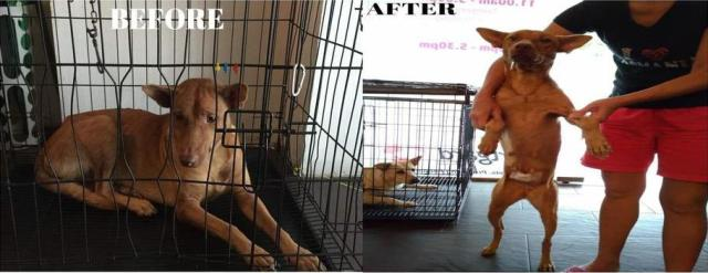 Neutering Aid For 2 Dogs In Rawang (Wan Choi May's)