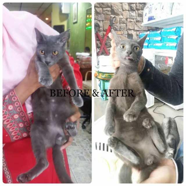 Neutering Aid For 3 Cats In Desa Pandan (Zainab Bt Abdul Rahman's)