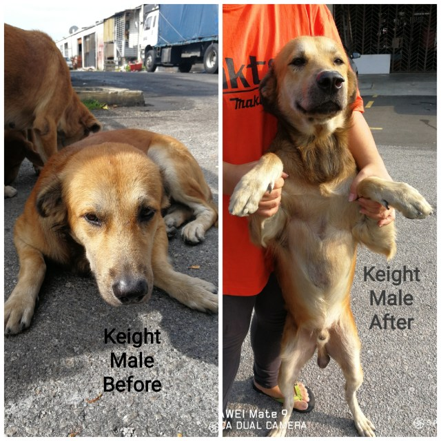 Neutering Aid For 3 Dogs In Puchong (Yong Wan Shan's)