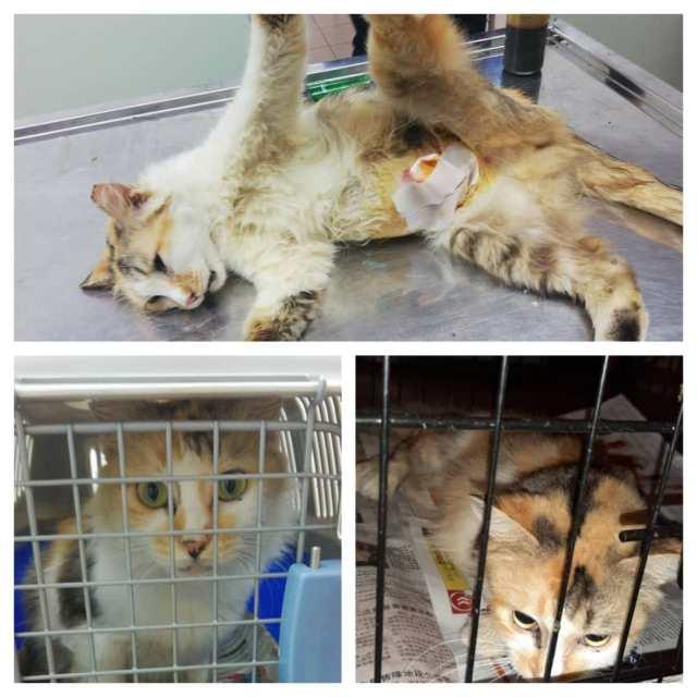 Neutering Aid For 3 Cats In Desa Aman (Yap Fong Yin's)