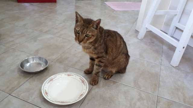 Vincent's Meal Menu