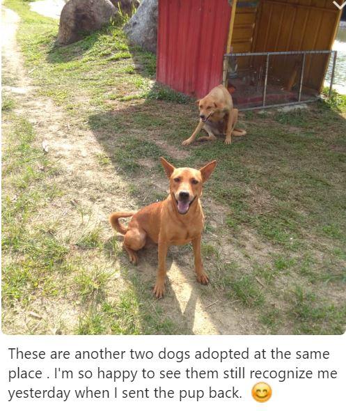 Neutering Aid For 1 Dog In Bangi (Wong Pei Ling's)