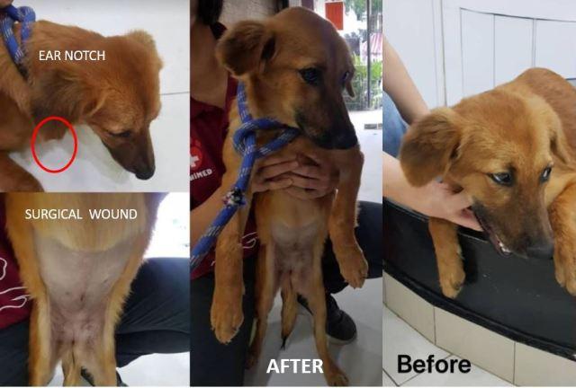 Neutering Aid For 1 Dog In Cheras (Lim Chyi Shin's)