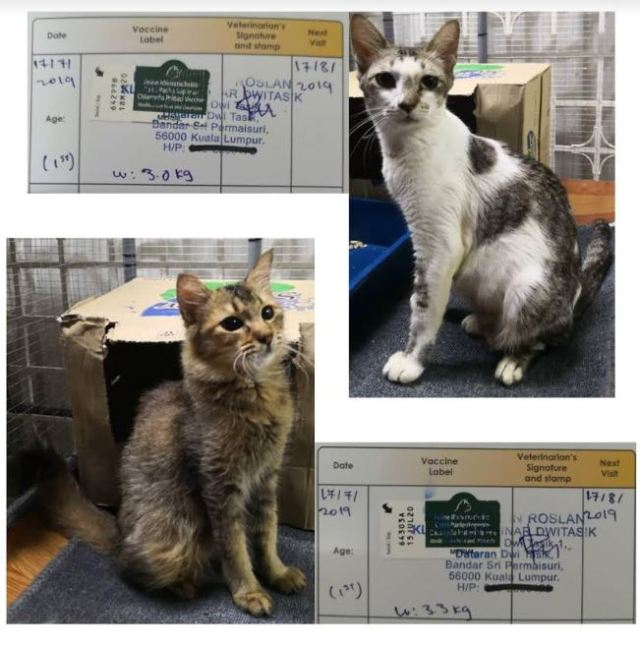 Vaccination Aid For 2 Cats In Cheras (Lum Kah Wai's)