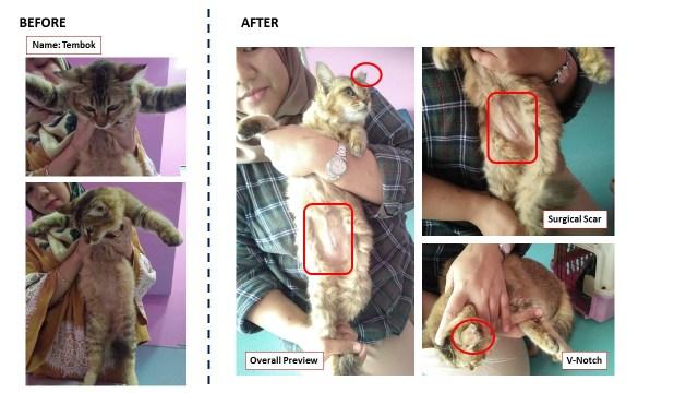 Neutering Aid For 3 Cats In Shah Alam (Nurul Najwa Bt Mohd Amin's)