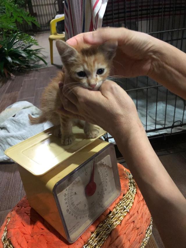 A Little Kitten Rescue