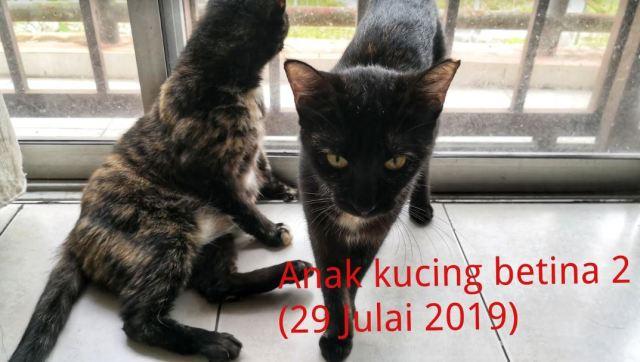 Neutering Aid For 1 Cat In Johor Bahru (Maya Saphira Bt Amir Hamzah's)