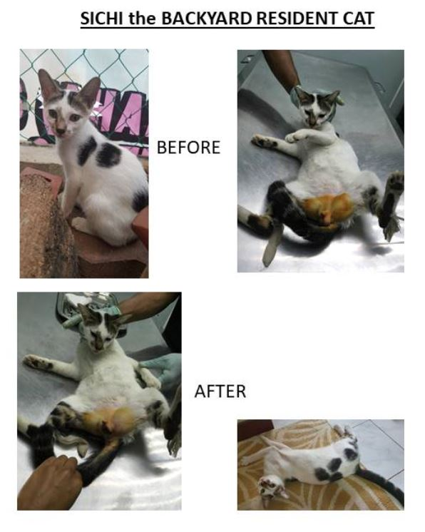 Neutering Aid For 1 Cat In Shah Alam (Norazida Bt Md Dahari's)