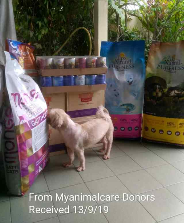Double Charity Donation To Imm's Shelter, Ipoh