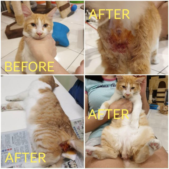 Neutering Aid For 1 Cat In Shah Alam (Goh Kok Ho's)