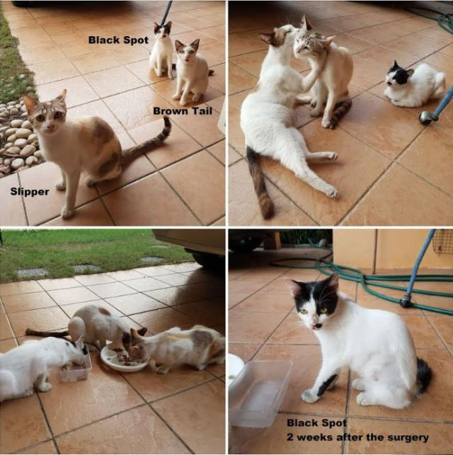 Neutering Aid For 1 Cat In Tasik Prima (Kok Ying Chee's) & Updates