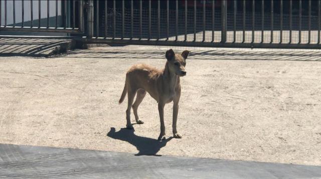 Neutering Aid For 4 Dogs In Seri Kembangan (Lai Sok Yieng's) & Updates