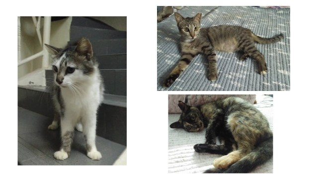 Neutering Aid For 3 Cats In Shah Alam (Nurul Najwa Bt Mohd Amin's) & Updates