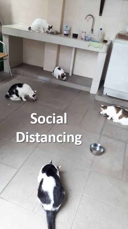 Social distancing « AnimalCare