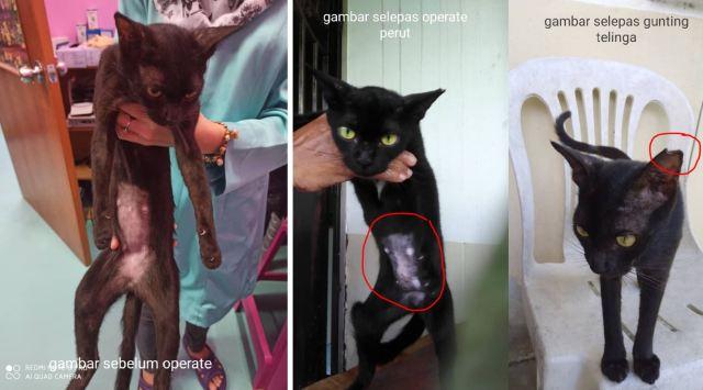 Neutering Aid For 1 Cat In Shah Alam (Maimunah Bt Abdul Majid's)
