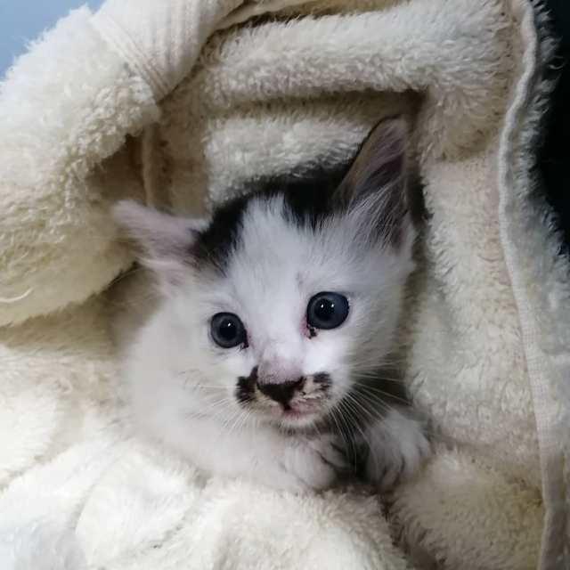Kitten For Adoption (Yee Veterinary Clinic)