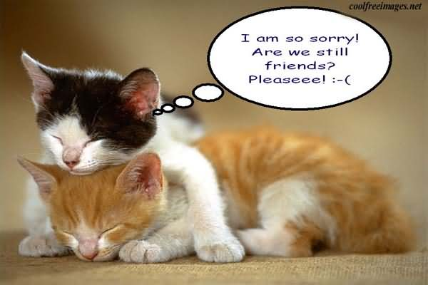 i-am-so-sorry-cute-cat-graphic
