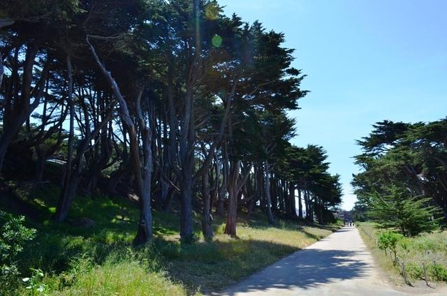 19. Eastern Coastal Trail ဆိုတဲ႕ သစ္ပင္ႀကီးေတြၾကားက လမ္းေလး ။