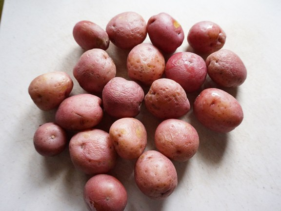 Potatoes, par-boiled and about to be peeled.