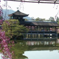 Gorgeous garden and Cherry blossoms, Heian-jingu shrine, Kyoto