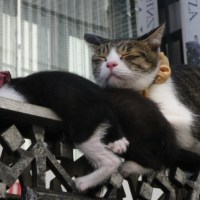 Ginza Cats, they are used to being taken a photograph