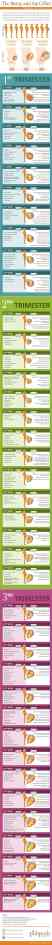 Best Infographic About Pregnancy 1