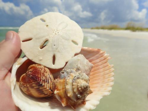 Sand Dollar in Mayaguana, Bahamas